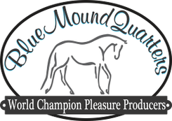 Blue Mount Quarter Horses